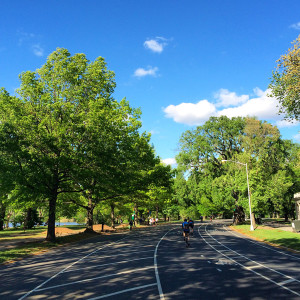 Cyclists on the loop in Prospect Park